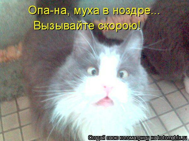 Котоматрица: Опа-на, муха в ноздре... Вызывайте скорою!