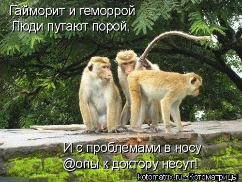 Котоматрица: Гайморит и геморрой Люди путают порой, И с проблемами в носу @опы к доктору несут!