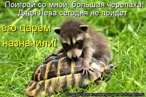 Котоматрица: Поиграй со мной, большая черепаха! его царем назначили! Дядя Лева сегодня не придет -