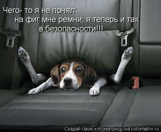 Котоматрица: Чего- то я не понял :  на фиг мне ремни, я теперь и так  в безопасности!!!