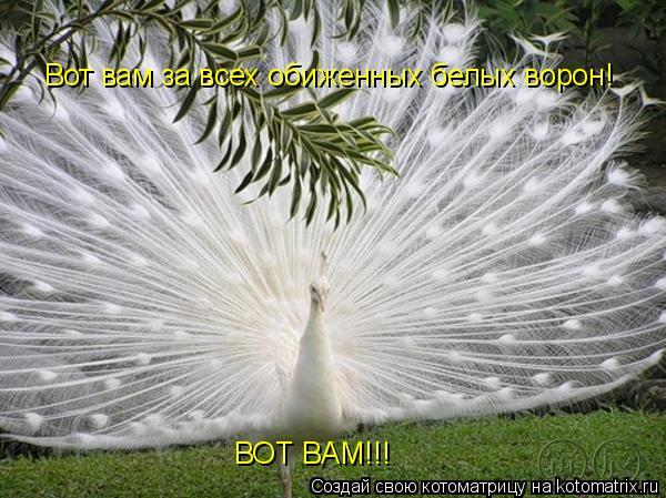 Котоматрица: Вот вам за всех обиженных белых ворон! ВОТ ВАМ!!!