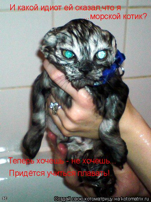 Котоматрица: И какой идиот ей сказал,что я  ...морской котик? Теперь хочешь - не хочешь... Придётся учиться плавать!