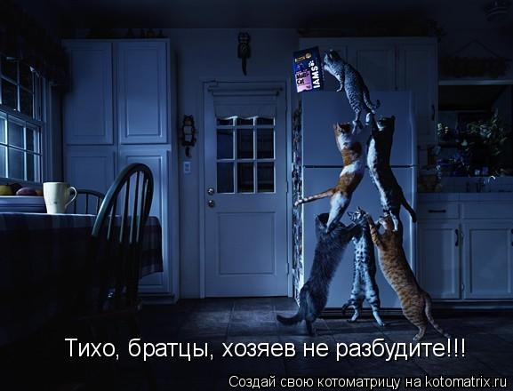 Котоматрица: Тихо, братцы, хозяев не разбудите!!!