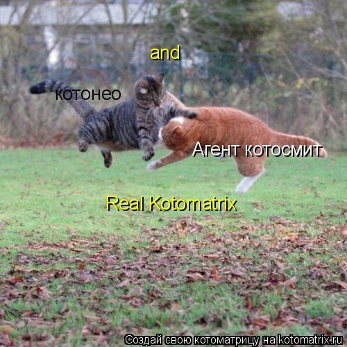 Котоматрица: Агент котосмит and котонео  Real Kotomatrix