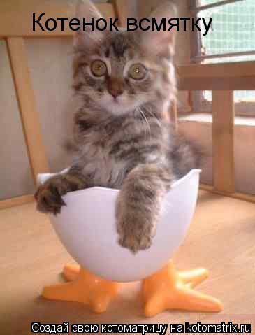Котоматрица: Котенок всмятку