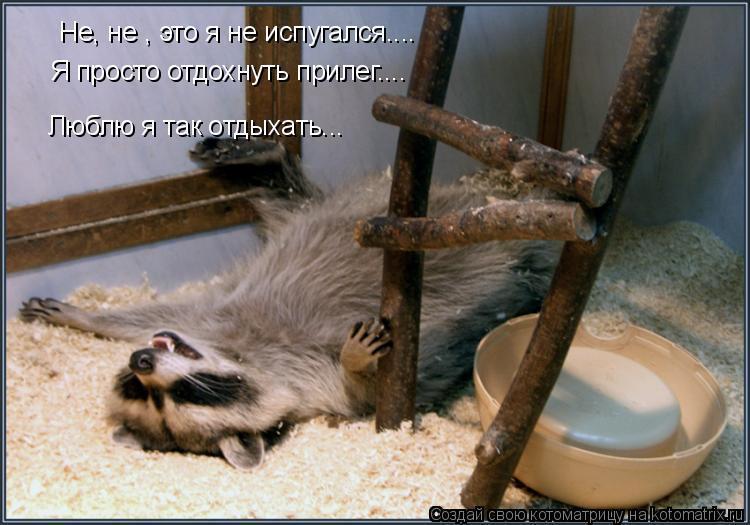 Котоматрица: Не, не , это я не испугался.... Я просто отдохнуть прилег.... Люблю я так отдыхать...