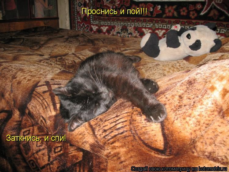 Котоматрица: Проснись и пой!!! Заткнись, и спи!