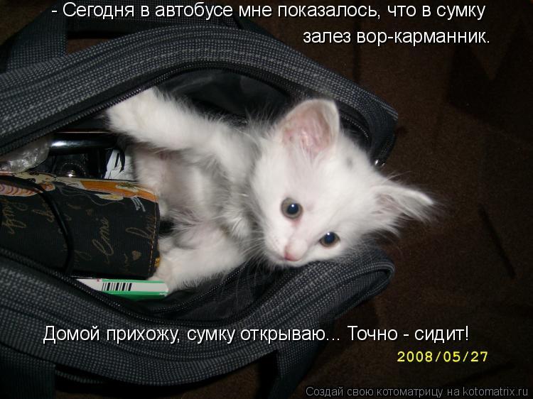 Котоматрица: залез вор-карманник. Домой прихожу, сумку открываю... Точно - сидит! - Сегодня в автобусе мне показалось, что в сумку