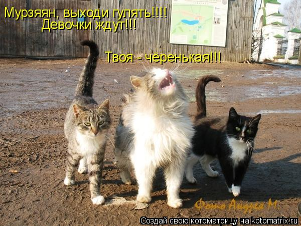 Котоматрица: Мурзяян, выходи гулять!!!!  Девочки ждут!!! Твоя - чёренькая!!!