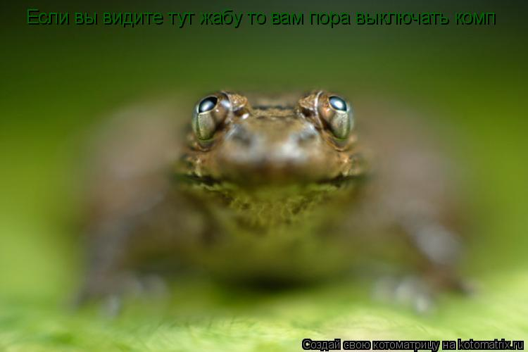 Котоматрица: Если вы видите тут жабу то вам пора выключать комп