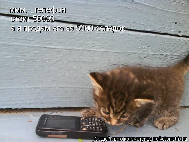 Котоматрица: ммм... телефон стоит 5000$ а я продам его за 5000 селёдок
