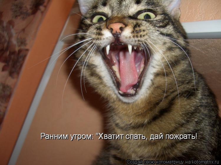 """Котоматрица: Ранним утром: """"Хватит спать, дай пожрать! Ранним утром: """"Хватит спать, дай пожрать!"""