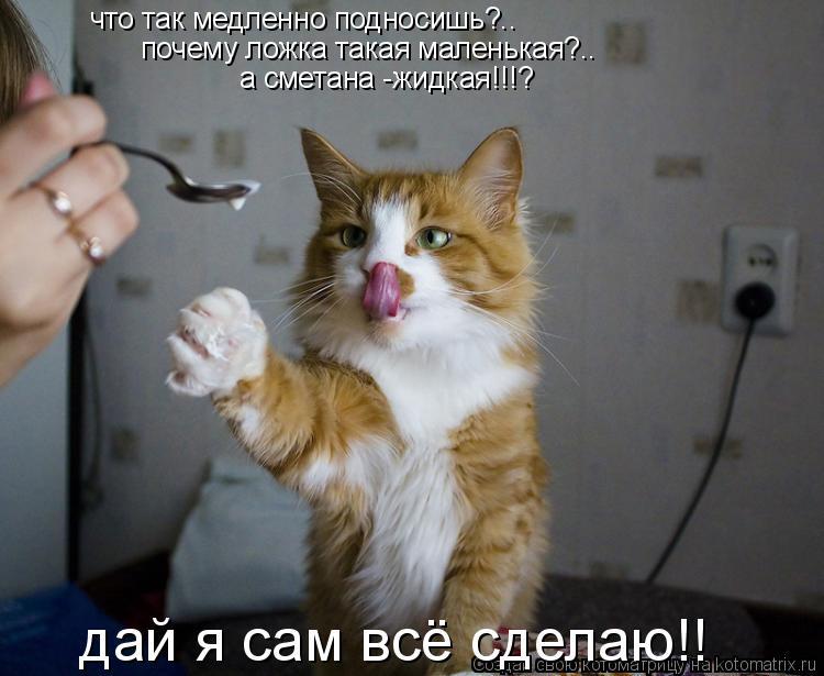 Котоматрица: что так медленно подносишь?.. почему ложка такая маленькая?.. а сметана -жидкая!!!? дай я сам всё сделаю!!