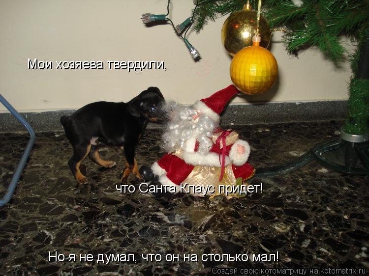 Котоматрица: Мои хозяева твердили, что Санта Клаус придет! Но я не думал, что он на столько мал!