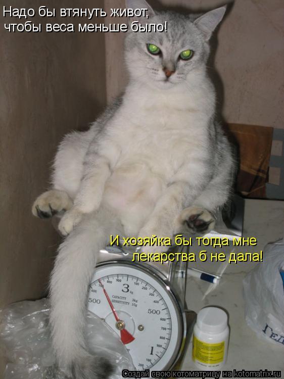 Котоматрица: Надо бы втянуть живот,  чтобы веса меньше было! И хозяйка бы тогда мне лекарства б не дала!