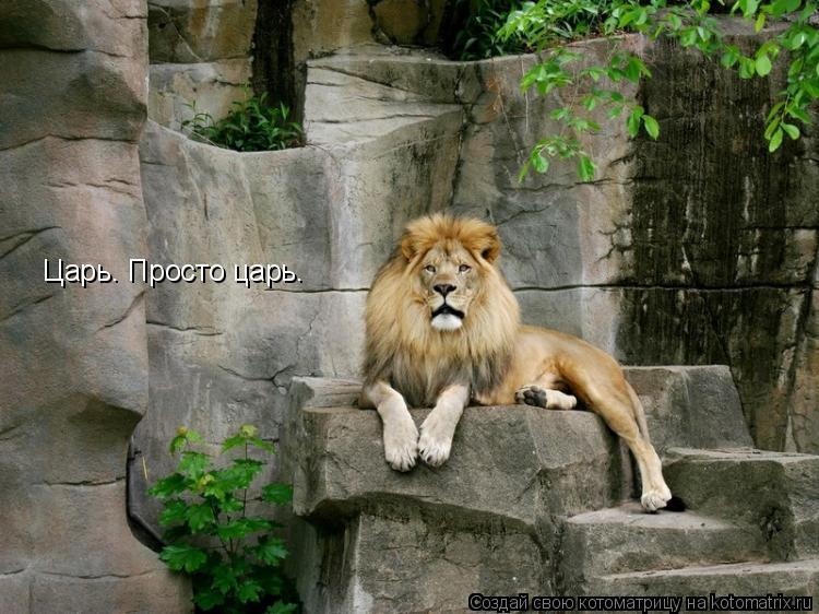 Котоматрица: Царь. Просто царь.