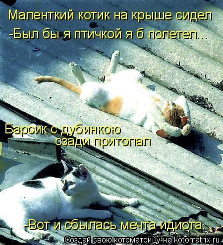 Котоматрица: Маленткий котик на крыше сидел -Был бы я птичкой я б полетел... Барсик с дубинкою сзади притопал -Вот и сбылась мечта идиота…