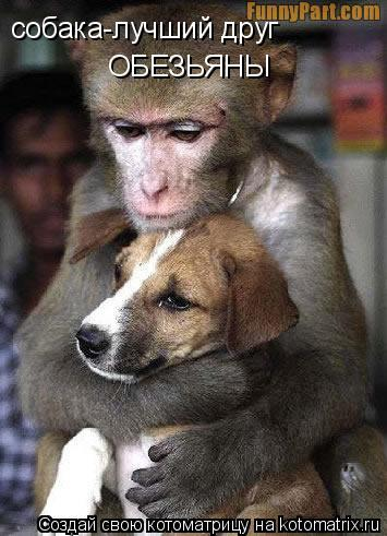 Котоматрица: собака-лучший друг ОБЕЗЬЯНЫ