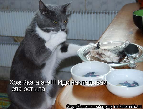 Котоматрица: Хозяйка-а-а-а!!! Иди накладывай ,  еда остыла.