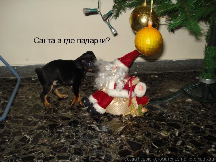 Котоматрица: Санта а где падарки?