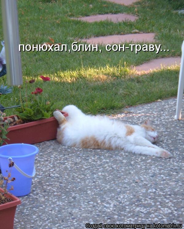 Котоматрица: понюхал,блин, сон-траву...