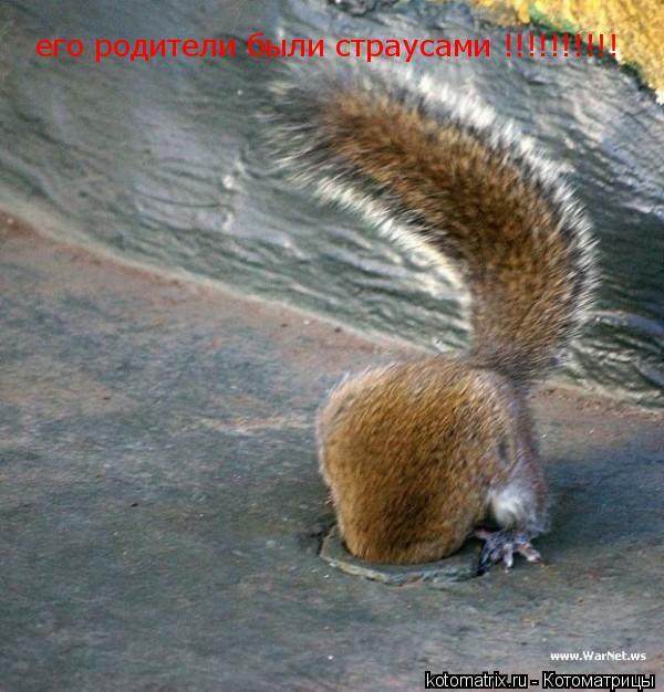 Котоматрица: его родители были страусами !!!!!!!!!!