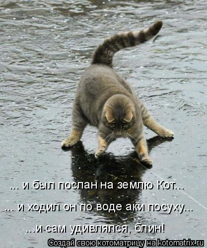 Котоматрица: ... и ходил он по воде аки посуху... ... и был послан на землю Кот... ...и сам удивлялся, блин!