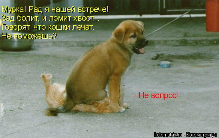 Котоматрица: Мурка! Рад я нашей встрече!  Зад болит, и ломит хвост... Говорят, что кошки лечат. Не поможешь? - Не вопрос!
