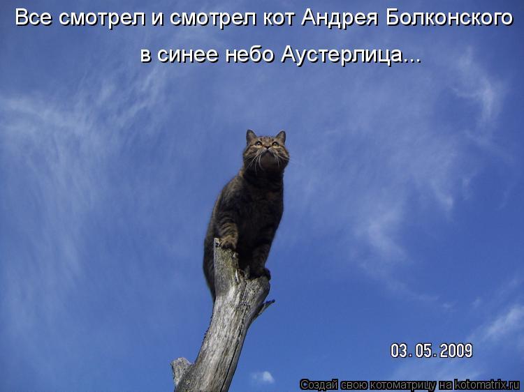 Котоматрица: в синее небо Аустерлица... Все смотрел и смотрел кот Андрея Болконского