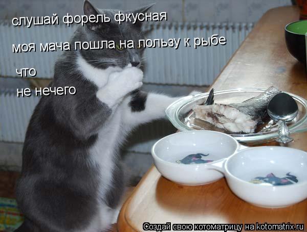 Котоматрица: слушай форель перчит слушай форель фкусная  моя мача пошла на пользу к рыбе что  не нечего