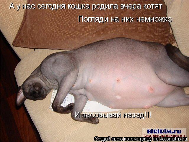 Котоматрица: А у нас сегодня кошка родила вчера котят Погляди на них немножко И засовывай назад!!!
