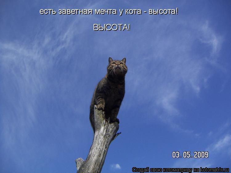 Котоматрица: есть заветная мечта у кота - высота! ВЫСОТА!