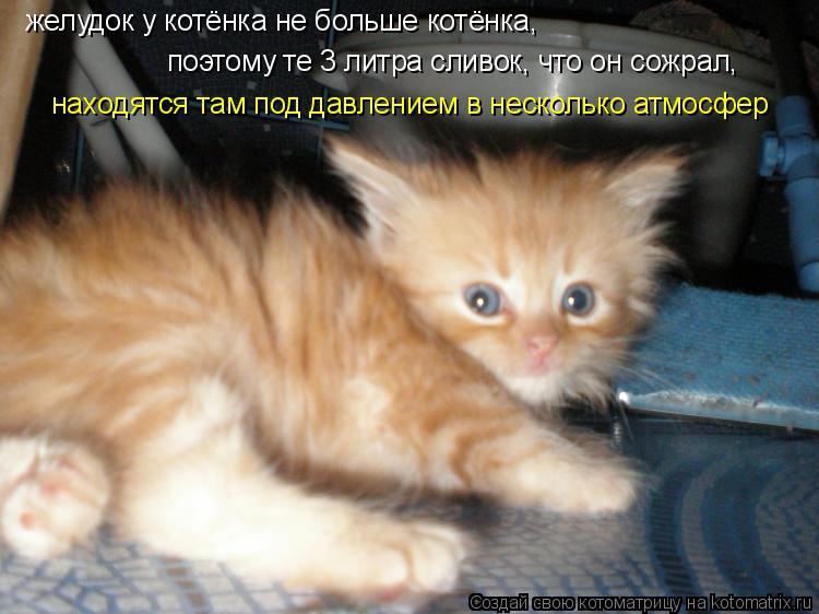 Котоматрица: желудок у котёнка не больше котёнка, поэтому те 3 литра сливок, что он сожрал, находятся там под давлением в несколько атмосфер