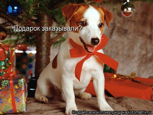 Котоматрица: Подарок заказывали?