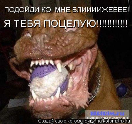 Котоматрица: ПОДОЙДИ КО  МНЕ БЛИИИИЖЕЕЕЕ! Я ТЕБЯ ПОЦЕЛУЮ!!!!!!!!!!!!