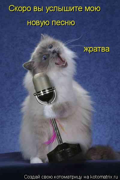 Котоматрица: Скоро вы услышите мою  новую песню жратва