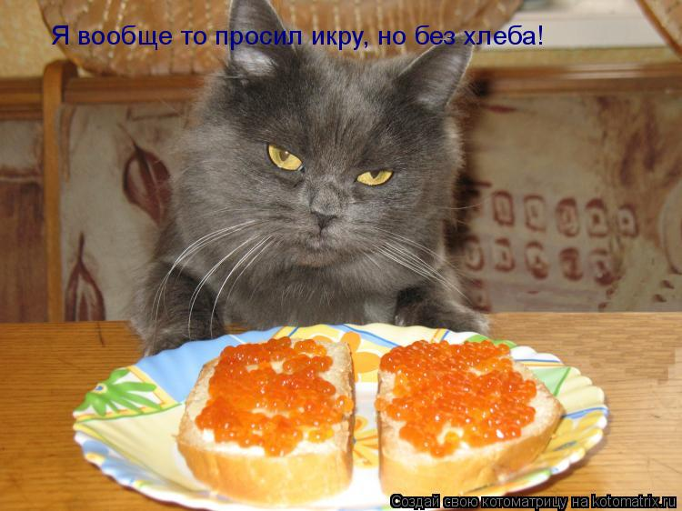 Котоматрица: Я вообще то просил икру, но без хлеба!