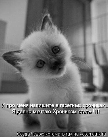 Котоматрица: И про меня напишите в газетных хрониках... Я давно мечтаю Хроником стать !!!!