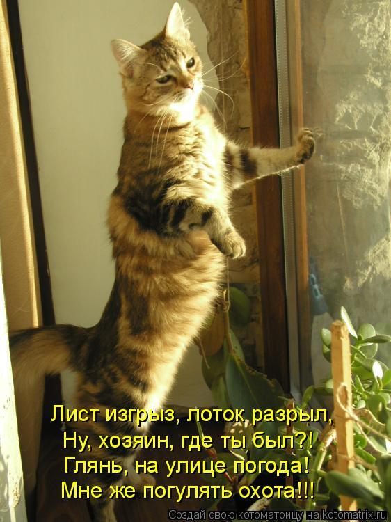 Котоматрица: Лист изгрыз, лоток разрыл, Ну, хозяин, где ты был?! Глянь, на улице погода! Мне же погулять охота!!!