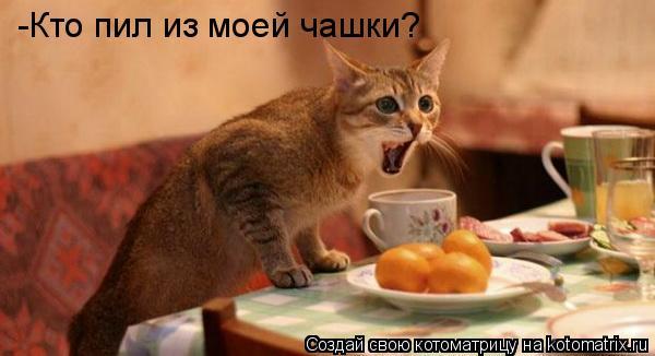 Котоматрица: -Кто пил из моей чашки?