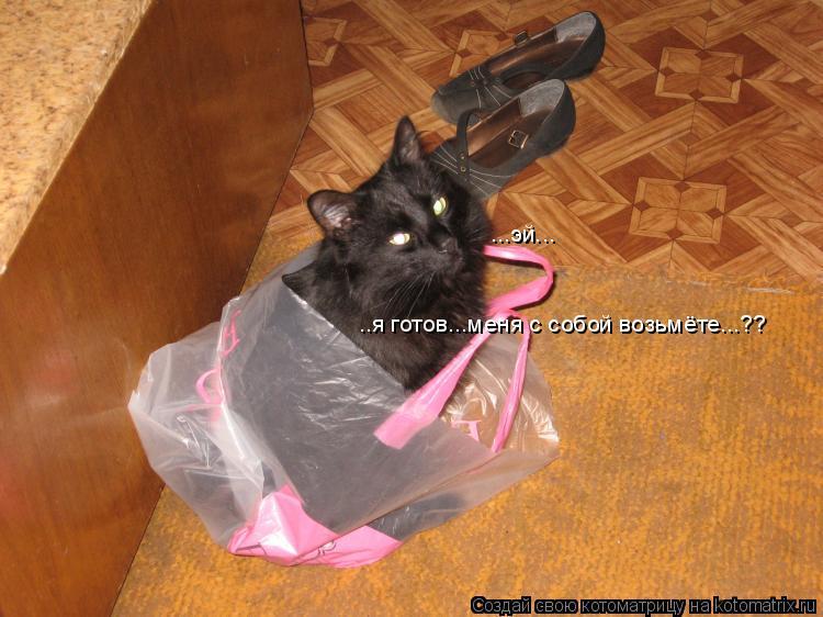 Котоматрица: ...эй... ..я готов...меня с собой возьмёте...??