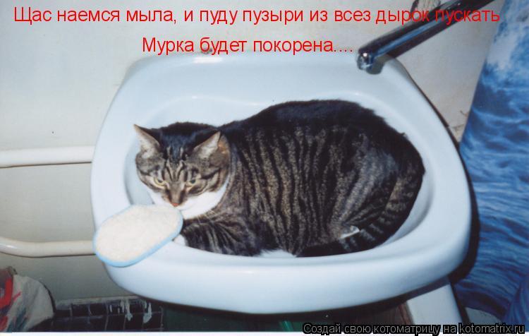 Котоматрица: Щас наемся мыла, и пуду пузыри из всез дырок пускать Мурка будет покорена....
