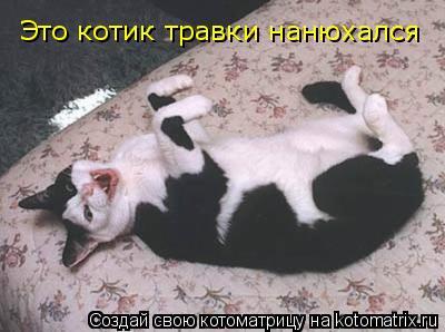Котоматрица: Это котик травки нанюхался