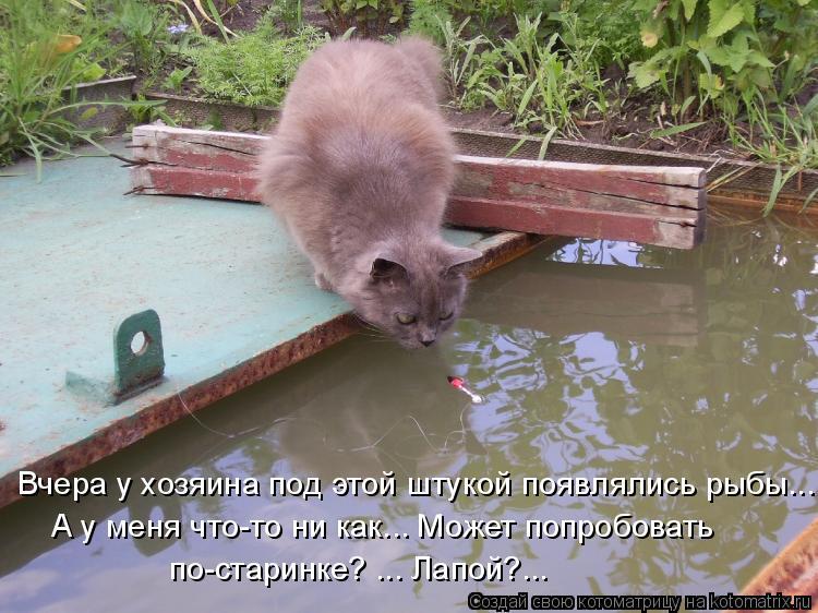 Котоматрица: Вчера у хозяина под этой штукой появлялись рыбы... А у меня что-то ни как... Может попробовать  по-старинке? ... Лапой?...