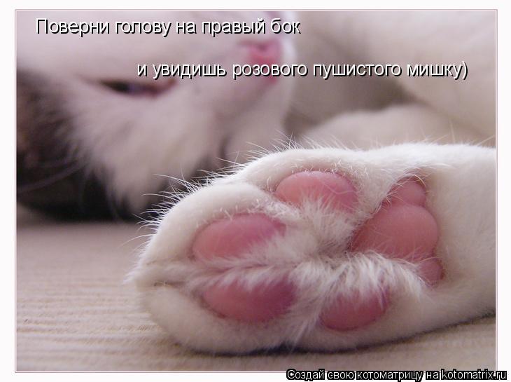 Котоматрица: Поверни голову на правый бок  и увидишь розового пушистого мишку)