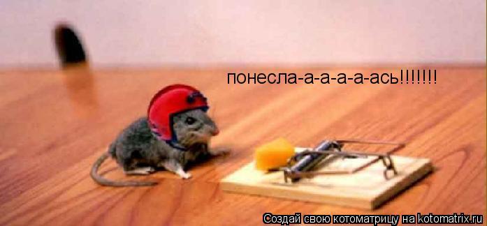 Котоматрица: понесла-а-а-а-а-ась!!!!!!!