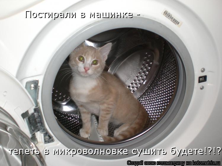 Котоматрица: Постирали в машинке -  тепеть в микроволновке сушить будете!?!?!?