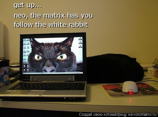 Котоматрица: get up... neo, the matrix has you follow the white rabbit