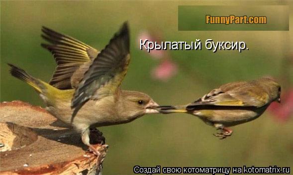 Котоматрица: Крылатый буксир.