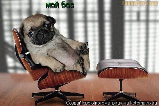 Котоматрица: мой бос мой бос мой бос